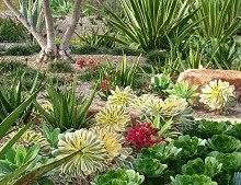 Santa Luz Succulents